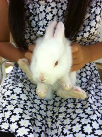 Nakatsugawa, Japan: ウサギの子供