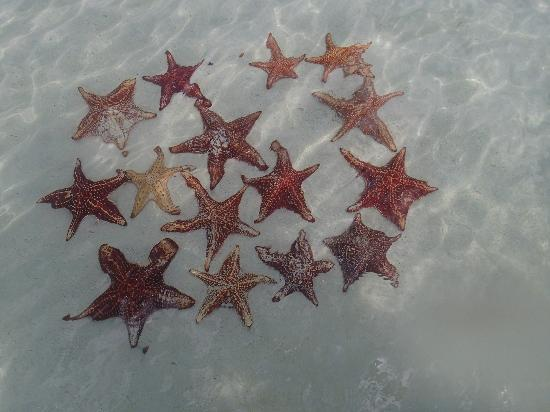 Star Fish Point: there were more than this but this was our initial find