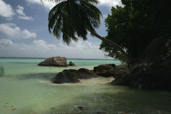 Le Jardin des Palmes: plage