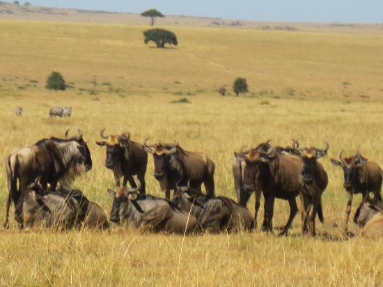 Mara Leisure Camp: Wildlife