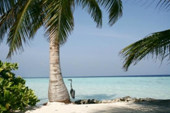 Biyadhoo Island Resort: Strand