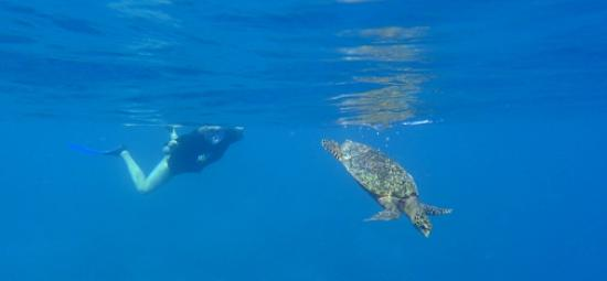 Biyadhoo Island Resort: underwater world