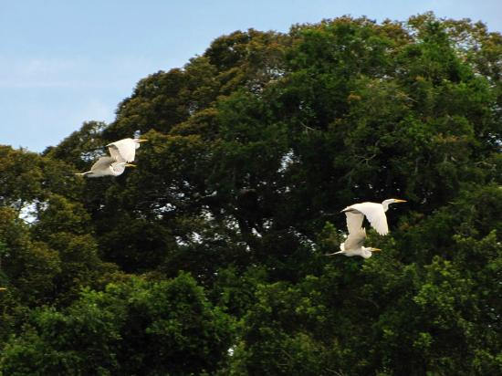 Casa Lupuna: Aves