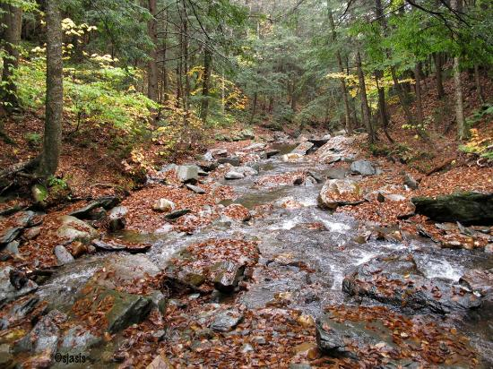 Savoy Mountain State Forest: Two Streams converge