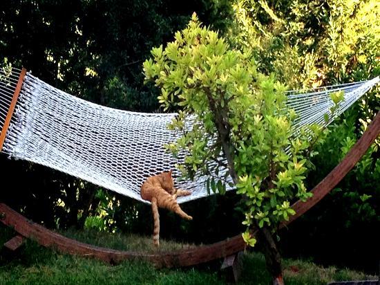 Agriturismo Tara: Rosmarino the Cat