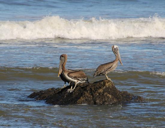 Boutique Hotel Lagarta Lodge: pelikanen in de baai beneden