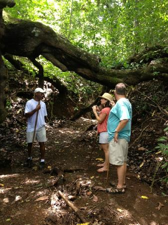 Jungle Butterfly Farm: The _ _ _ Tree