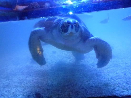 Aquaworld Aquarium & Reptile Rescue Centre: Turtle