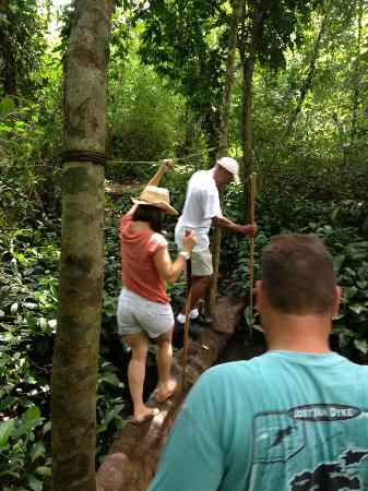Jungle Butterfly Farm: The natural bridge