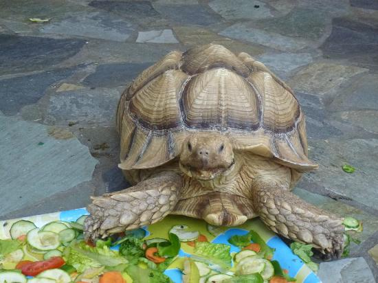 Aquaworld Aquarium & Reptile Rescue Centre: Blondie the Tortoise