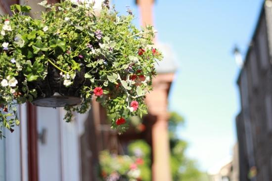 beautiful hanging basket outside mango tree