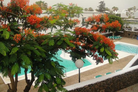 Apartamentos Guacimeta Lanzarote: View from our apartment balcony
