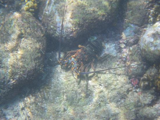 Chileno Beach: Lobster tonight!