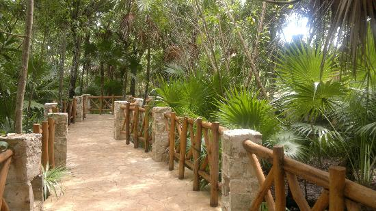 IBEROSTAR Paraiso Del Mar: Path to the beach