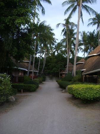 Koh Tao Coral Grand Resort: Path to back of resort