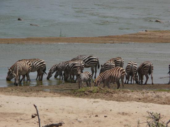 Safari Kenya Watamu - Day Tours: Zebre al fiume Galana