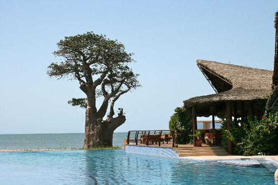 Hotel Le Royal Lodge : Entre piscine et océan ; le gros baobab