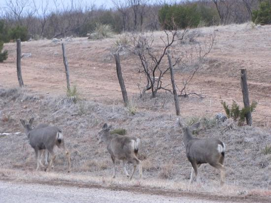 Palo Duro Canyon State Park: Friendly bunch