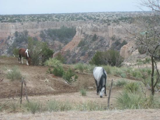 Palo Duro Canyon State Park: Great horses at the entrance of the park