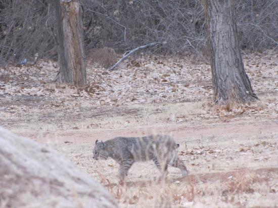 Palo Duro Canyon State Park: What is THAT?