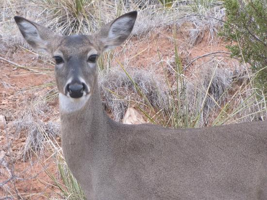 Palo Duro Canyon State Park: Friendly face..