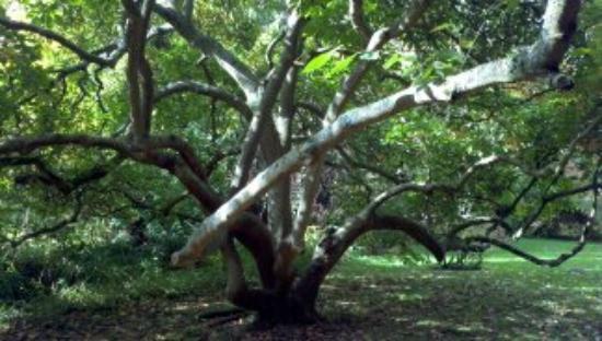 Royal Victoria Park: Botanical Gardens