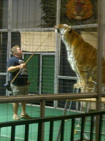 Big Cat Habitat and Gulf Coast Sanctuary: The entertaining animal tricks show with former circus animals.