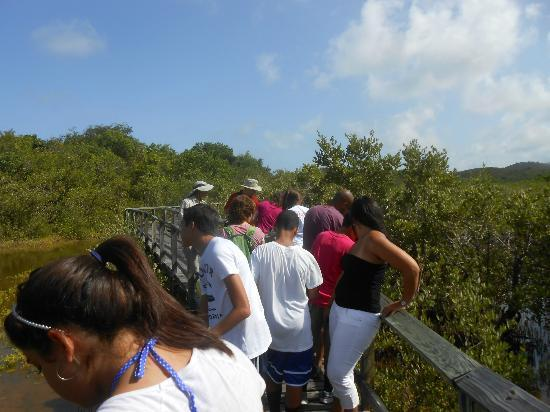 Las Cabezas de San Juan Nature Reserve: Mangrove swamp