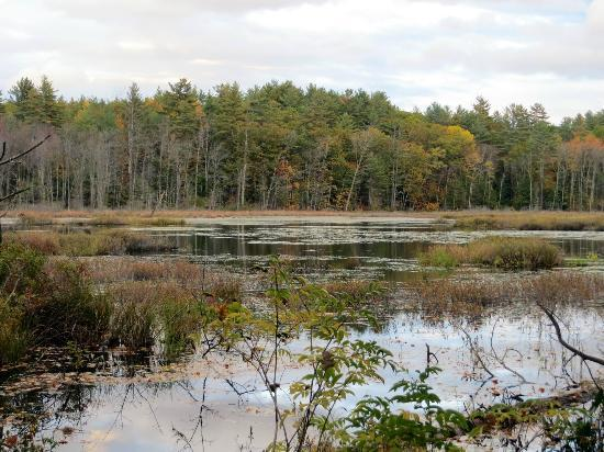 Quincy Bog Natural Area: Quincy Bog
