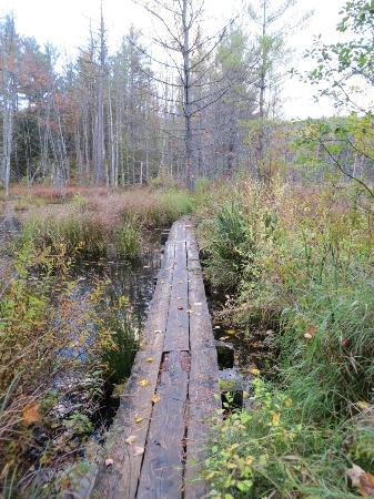 Quincy Bog Natural Area: One of many wooden plank footbridges