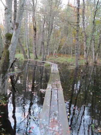 Quincy Bog Natural Area: Footbridge over water