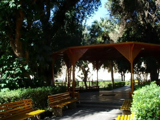 Movenpick Resort Aswan: Botanical garden behind the hotel