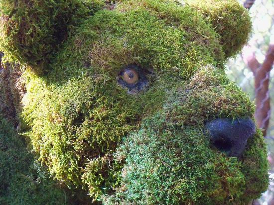 Landscaping Basics: Topiary – r u l y