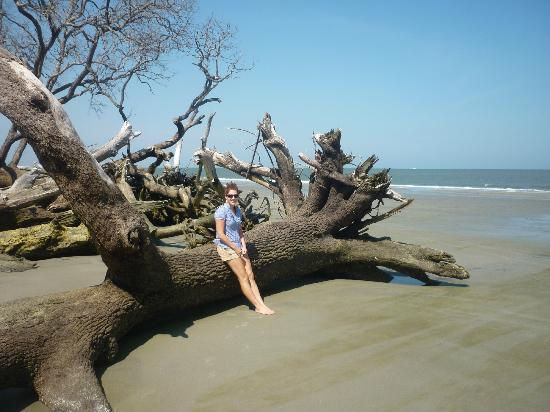 Hunting Island State Park On The Beach