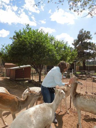 Grand Canyon Deer Farm: Petting the deer