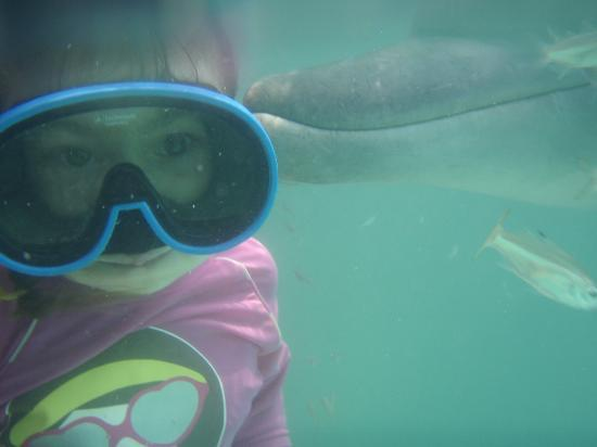 Bali Dolphins: Underwater Kisses!!