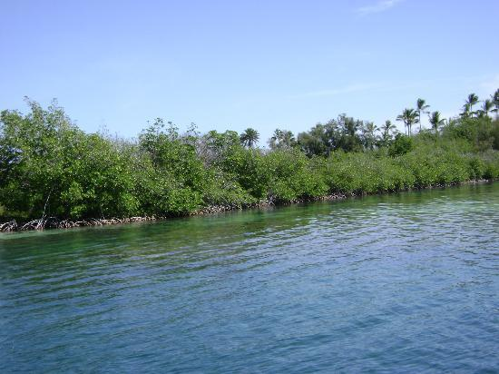 Holokai Kayak and Snorkel Adventure : Snorkel spot near Coconut Island