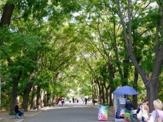 Potemkin Steps: Streets are lined with bushy trees.