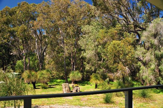 Acacia Chalets Margaret River: Outlook from Decks - Natural Bush Settings