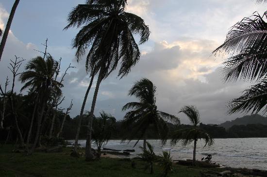 Villas del Caribe: palmen
