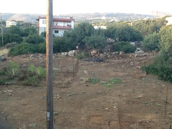 Camari Garden Apartments: Scrubland & chickens at the back of the hotel from room door.