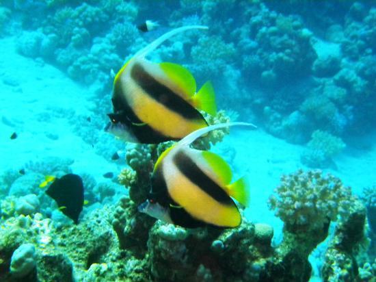 TGI Diving Marsa Alam: SPLENSIDA COPPIA