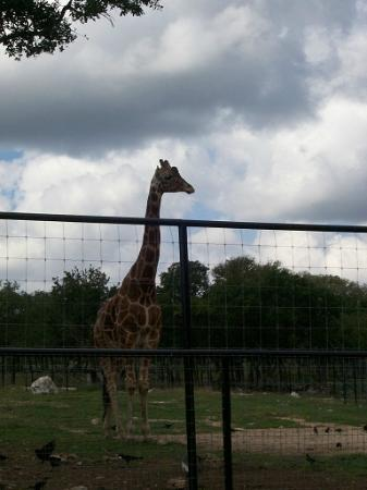Natural Bridge Wildlife Ranch: San Antonio Wildlife Ranch