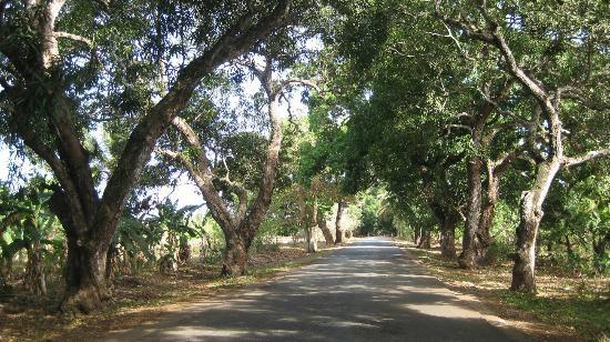 Pumzika Beach Resort: Auf dem Weg nach Makunduchi