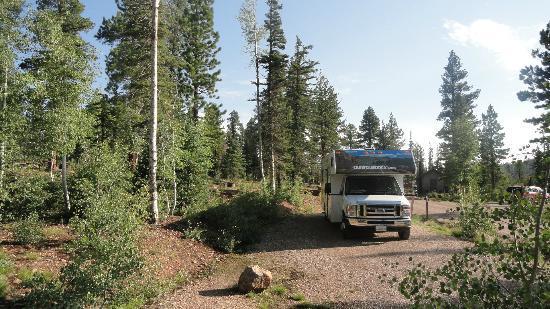 DeMotte Campground: in mezzo agli alberi