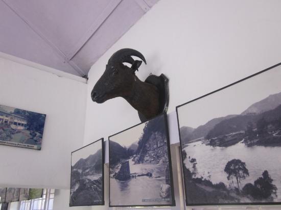 Kannan Devan Tea Museum: niligiri tar 