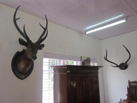 Kannan Devan Tea Museum: hunting memorabilia 