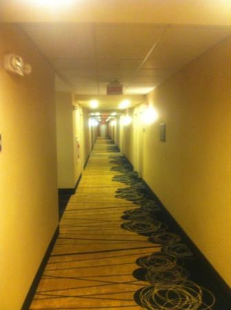 Hampton Inn Meadville: Clean hallways modern look