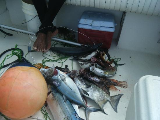 SeavisTours: fish that a local had caught with a spear