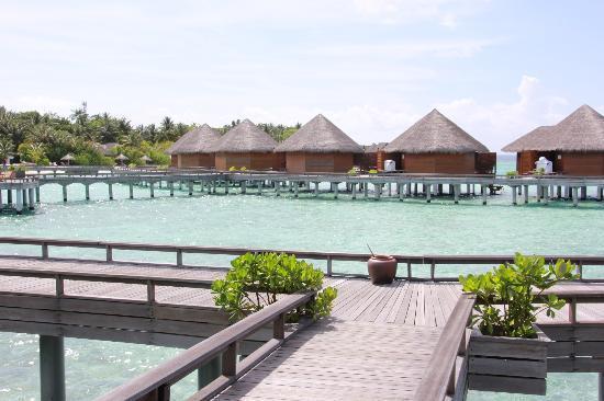 باروس جزر المالديف: 水上コテージ 